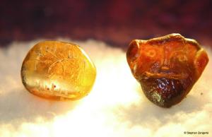 ambre 3