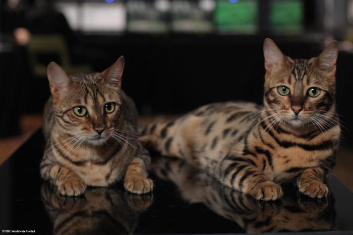 La double vie des chats 2